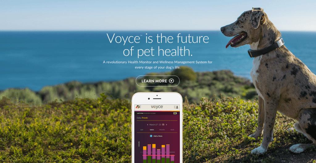 Voyce collier de santé pour animaux