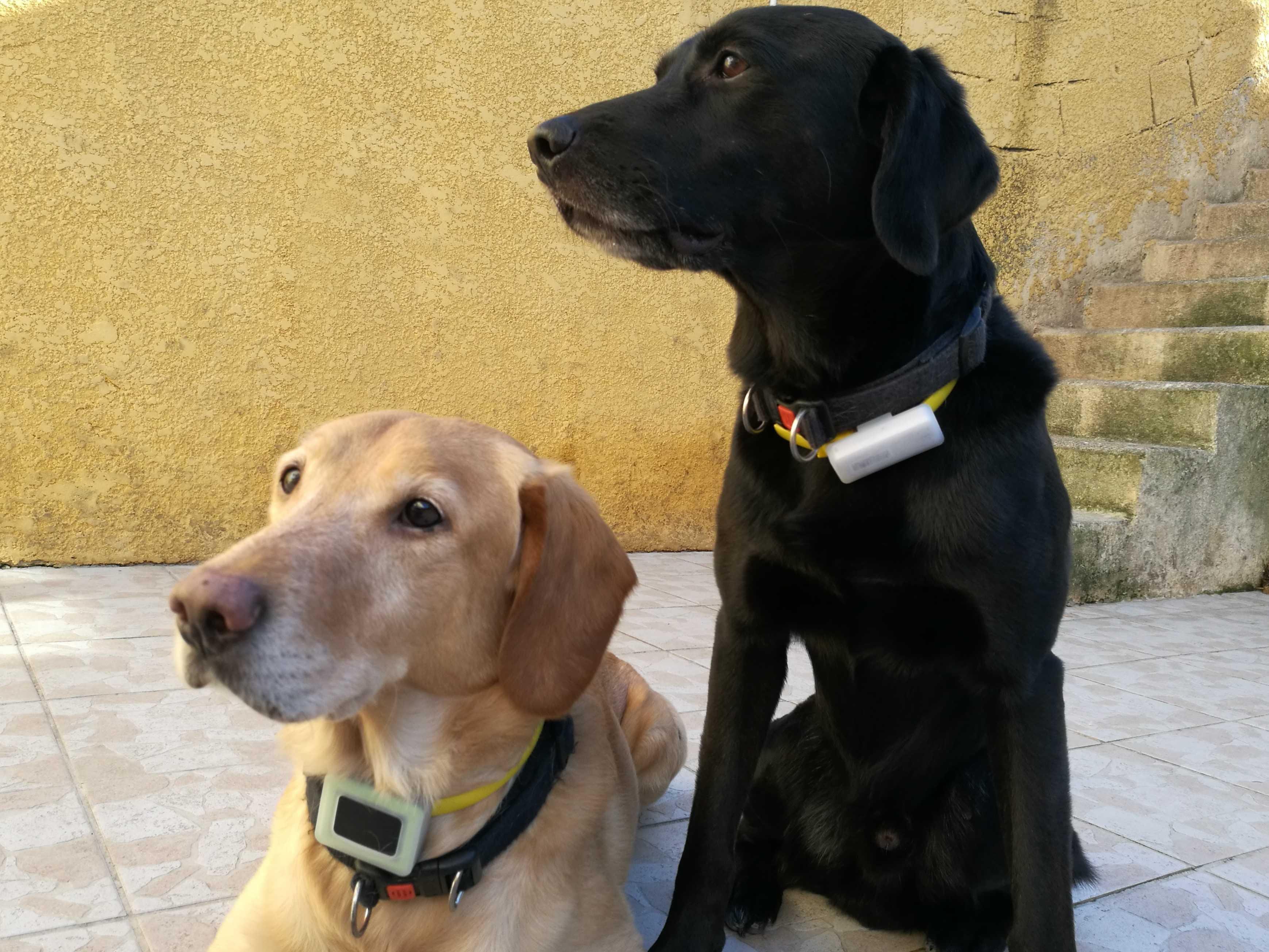 Max à hérité du Weenect Dogs et Black du Weenect Cats.