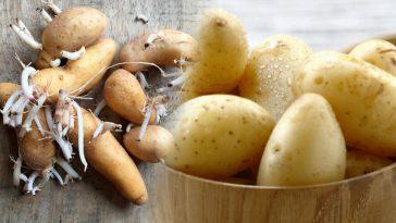 Pommes de terre: ces astuces étonnantes pour éviter qu'elles germent, ça va vous changer la vie!