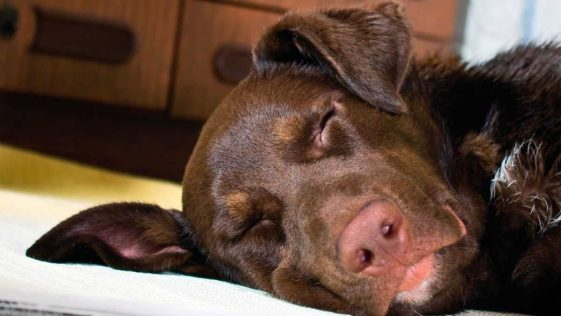 Euthanasie: Ce vétérinaire dévoile ce que ressent votre animal avant de mourir, ne le laissez jamais seul !